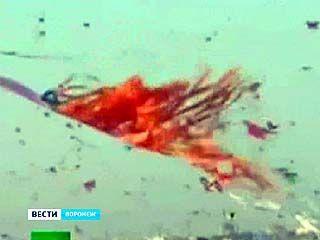 В Воронеже прошёл фестиваль воздушных змеев