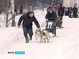 В Воронеже прошли первые соревнования по ездовому спорту