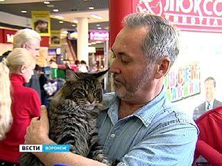 В Воронеже состоялась большая выставка кошек