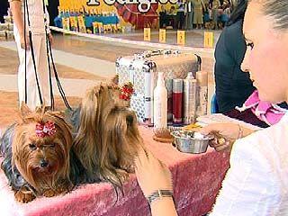 В Воронеже состоялась выставка собак