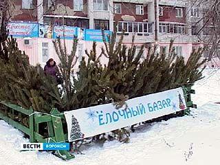 В Воронеже стартовали проверки ёлочных базаров