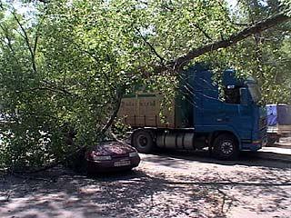 В Воронеже старый тополь упал на автомобиль