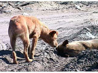 В Воронеже возросла численность бездомных собак