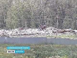 В Воронеже впервые за выброс отходов в неположенном месте завели уголовное дело