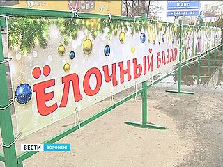 В Воронеже заработали официальные ёлочные базары