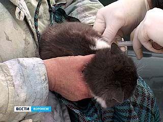 В Воронеже зарегистрирован первый в этом году случай заболевания бешенством