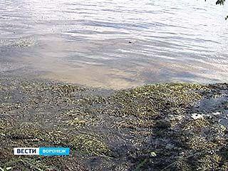 В Воронеже жарко - на пляжи нельзя!