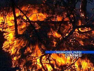 В воронежских лесах сохраняется тяжелая пожароопасная обстановка