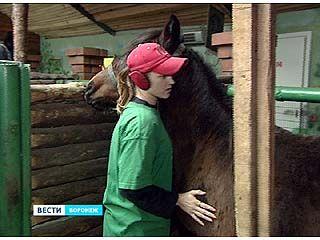 В Воронежский зоопарк из Удмуртии приехала тройка лошадей - вятской породы
