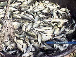В Воронежское водохранилище запустят 2 тонны мальков