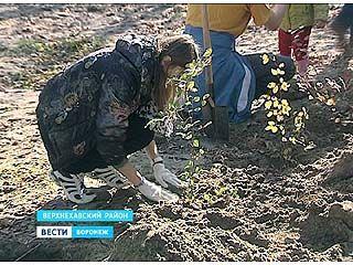 В Воронежском биосферном заповеднике провели субботник