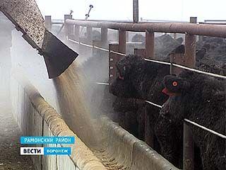 В Воронежском регионе появится мясной кластер