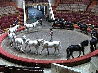 В Воронежском цирке начались выступления Сарвата Бегбуди
