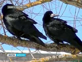 В Воронежском заповеднике имени Пескова встречают первых вестников весны