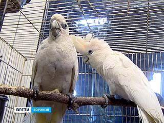 В Воронежском зоопарке - пополнение