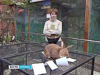 В Воронежском зоопарке День сурка встречали с кроликом