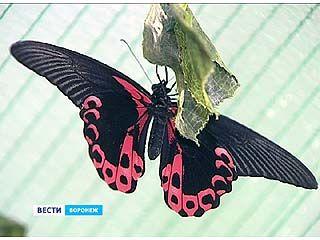 В Воронежском зоопарке открылась уникальная выставка экзотических бабочек