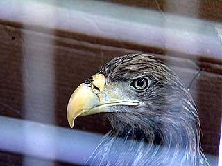 В Воронежском зоопарке снова выхаживают подкидыша