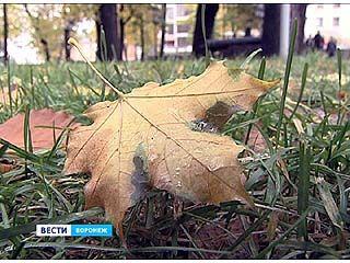 В Воронежской области к концу недели ожидается до 10 градусов тепла