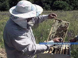 В Воронежской области пчелы стали нападать на людей