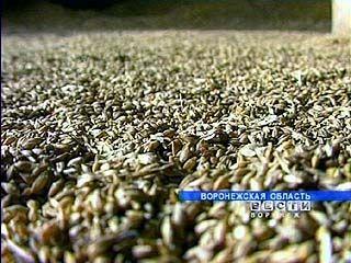 В Воронежской области собрано более 3 миллионов тонн зерна