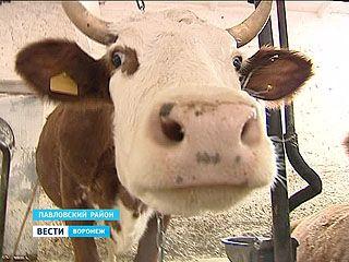 В Воронежской области составили карту здоровья животных
