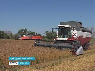 В Воронежской области стартовала уборочная кампания
