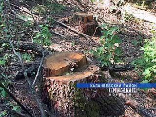 В Воронежской области участились случаи незаконной вырубки леса