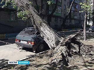 В Воронежской области устранили последствия урагана
