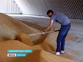 """В Воронежской области вырос """"рыжик"""""""
