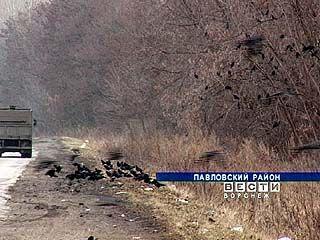 В южные районы Воронежской области прилетели грачи