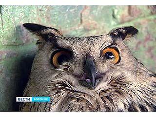В зоопарке определили пол филина - птица снесла яйцо