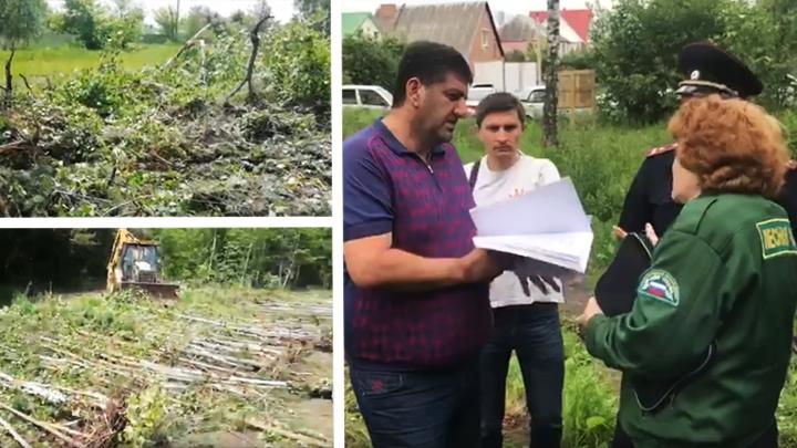 Воронежская прокуратура проверит законность вырубки деревьев в Репном