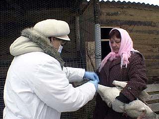 Ветеринарные службы пребывают в состоянии повышенной готовности