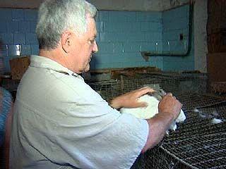 Ветеринары будут ставить опыты на виртуальных животных