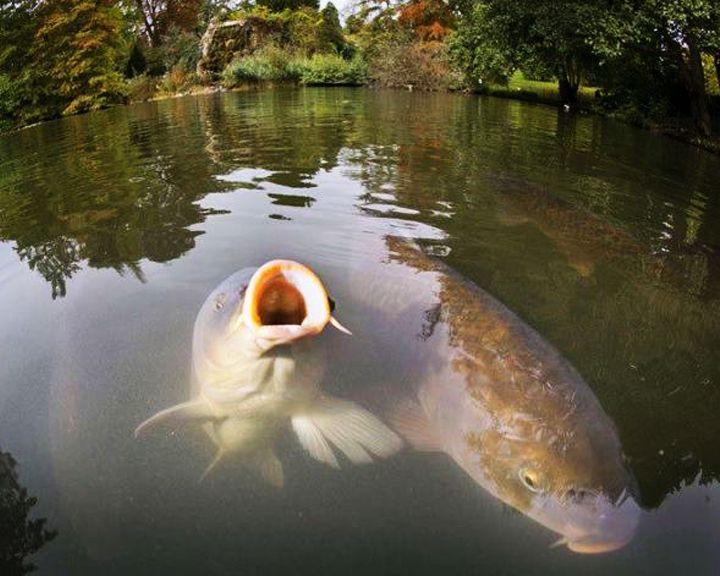 ВИДЕО: В пруду главного парка Россоши появилась рыба
