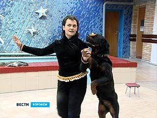 "Во Дворце творчества детей и юношества прошел ""Шоу-парад собак"""