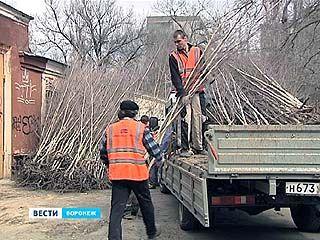 Воронеж готовится к глобальному озеленению