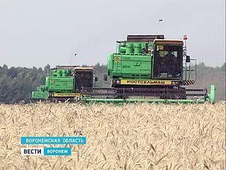Воронежская область не получит компенсации за потерянный в этом году урожай