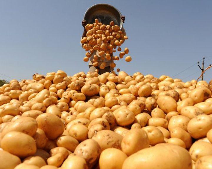 Воронежская область заняла первое место в «картофельном» рейтинге