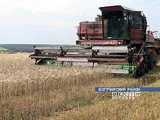 Воронежские аграрии бьют рекорды