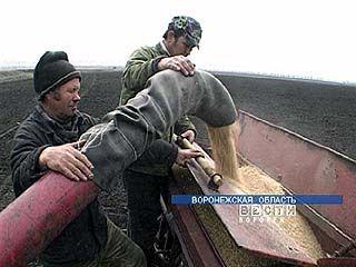 Воронежские аграрии готовятся к севу озимых