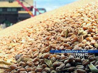 Воронежские аграрии обеспокоены качеством зерна