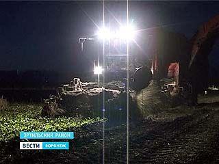 Воронежские аграрии по ночам убирают подсолнечник и свеклу