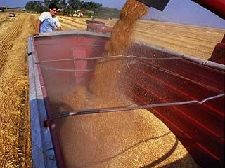 Воронежские аграрии собрали второй миллион тонн зерна нового урожая
