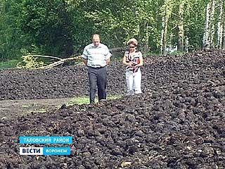 Воронежские аграрии сокращают посевы свеклы и переходят на рапс, кукурузу и сою