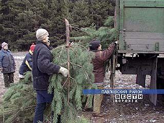 Воронежские лесники вышли в дозор