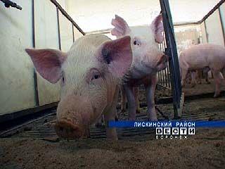 Воронежские свинофермы переведены на закрытый режим работы