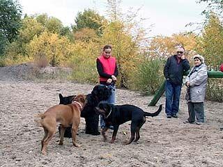 Воронежские законодатели хотят запретить выгул собак во дворах и на улицах