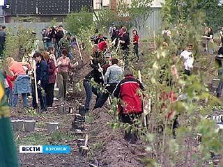 Воронежский регион присоединился к общенациональному дню посадки леса